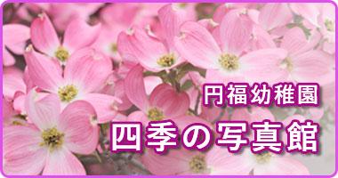 円福幼稚園 四季の写真館の画像